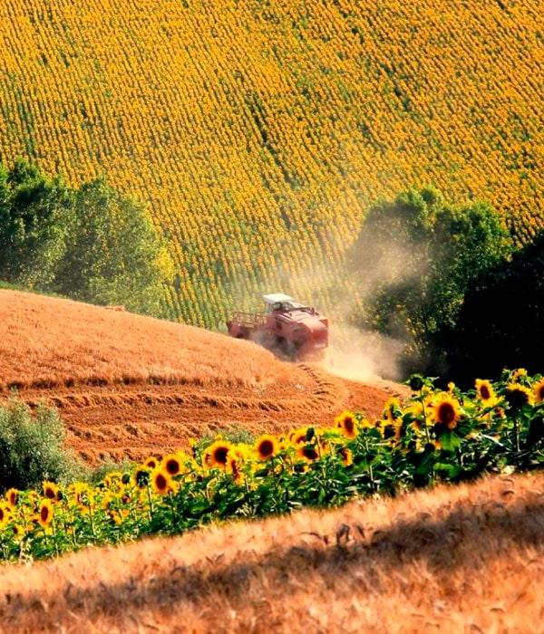 Стало известно число фермерских хозяйств в Украине
