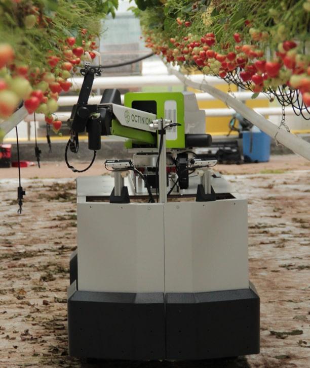 В Германии представили первого в мире робота для сбора клубники
