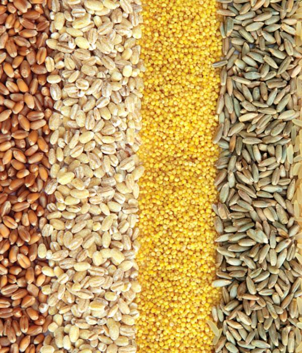 Зерновые: экспорт, отгрузки, хранение, цены