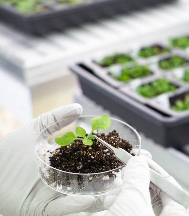 Британские исследователи совершили прорыв в борьбе с болезнями растений