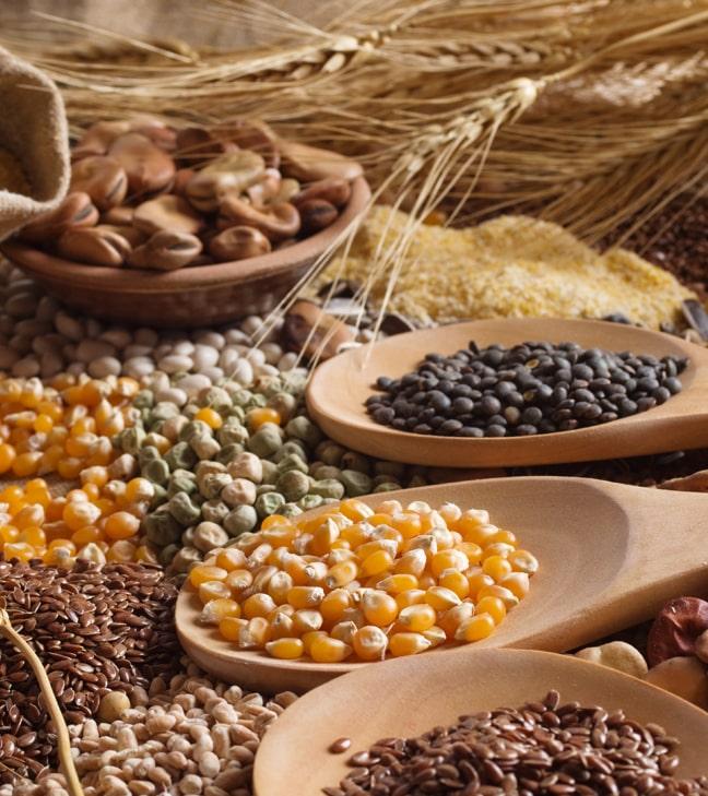 Экспорт продукции АПК составил $1,7 млрд