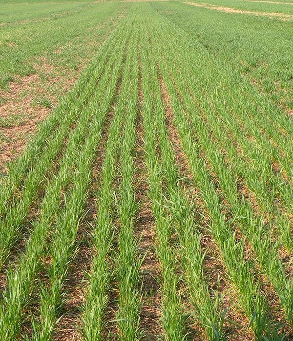 Ранние яровые зерновые и зернобобовые посеяны на площади 58 тыс. га