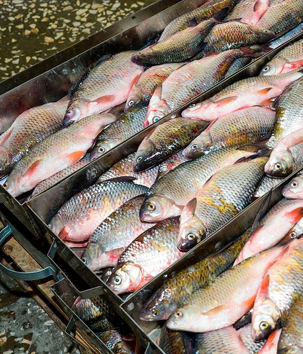 Рыба: экспорт, импорт, производство