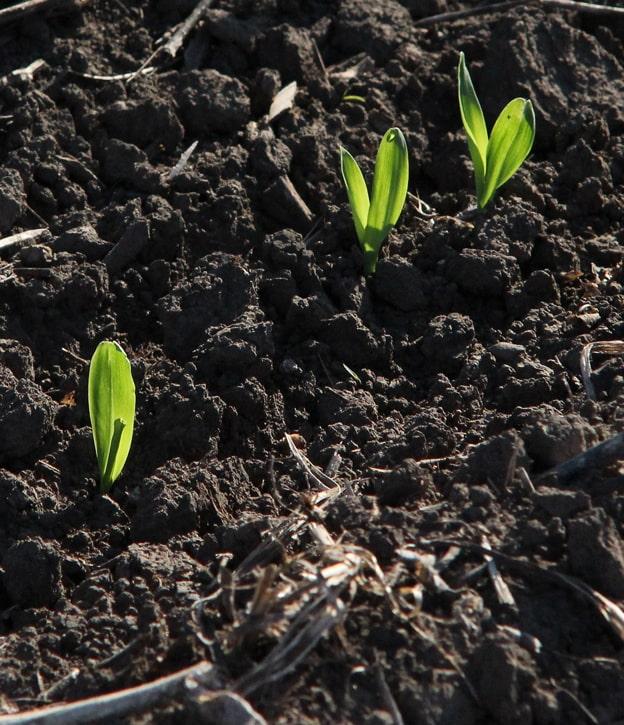 Сельхозтоваропроизводители засеяли 258 тыс. га яровыми зерновыми и зернобобовыми