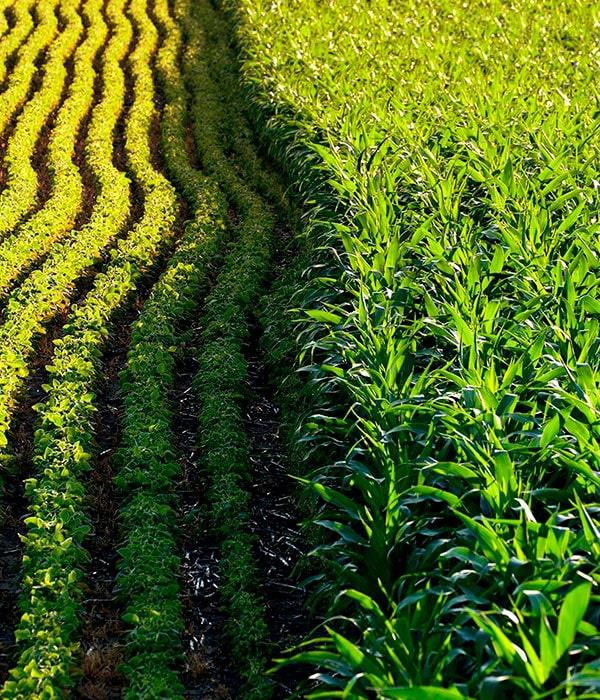 USDA: использование семян, устойчивых к гербицидам, стремительно возросло