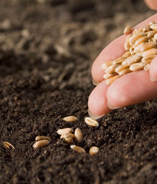 В отношении украинских семян сохраняется дискриминация — мнение
