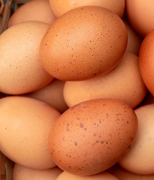 Экспорт яиц: новые рынки и цифры