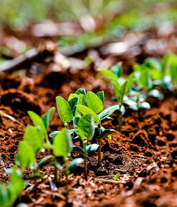 Аграрии сеют сою, экспорт, импорт, переработка, запасы