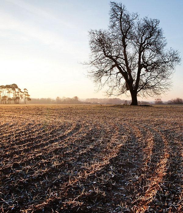 Фермерам западных областей придется пересевать поля?