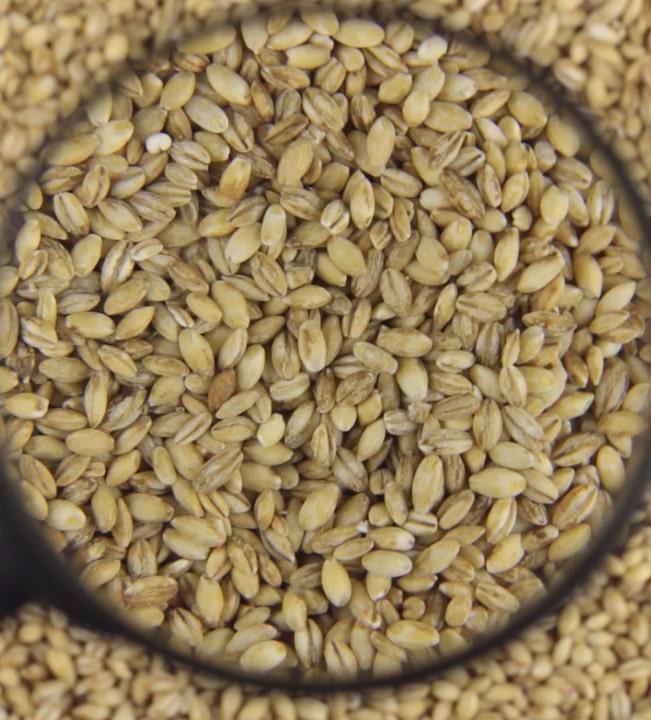 Кабинет министров определил порядок проведения сертификации семян
