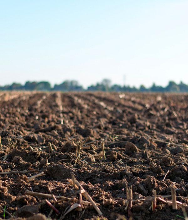 Противодействие деградации почв: в Украине появилось Национальное грунтовое партнерство