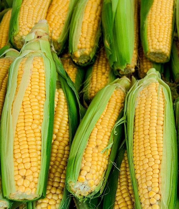 Украина показала себя в качестве мирового экспортера кукурузы