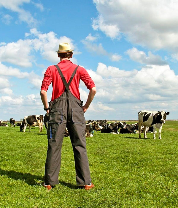 В Украине увеличилось количество фермерских хозяйств и кооперативов