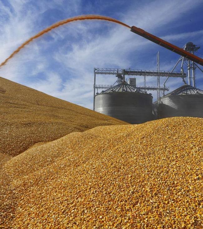 49 млн тонн зерновых отправлено на внешние рынки