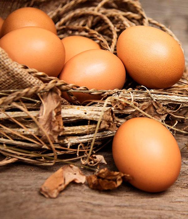 Македония будет покупать украинские куриные яйца