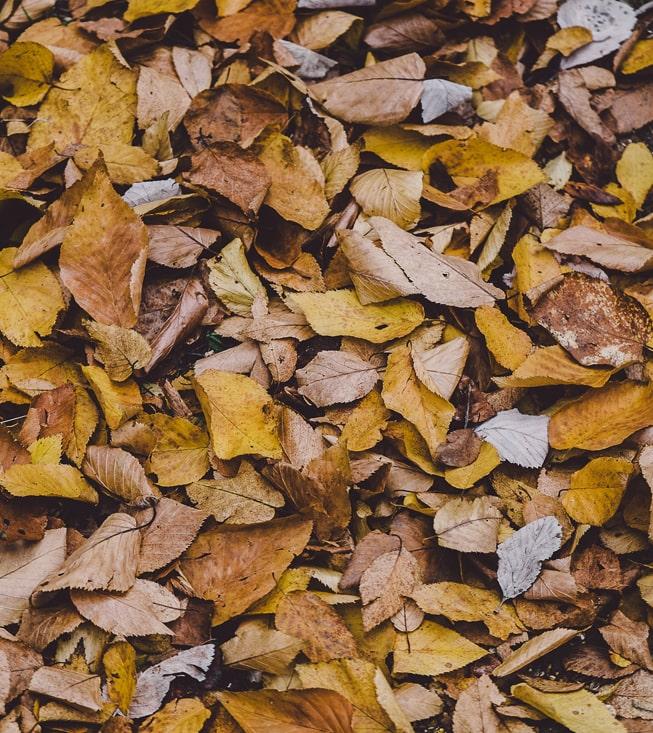 Опавшие листья будут превращать в биогаз