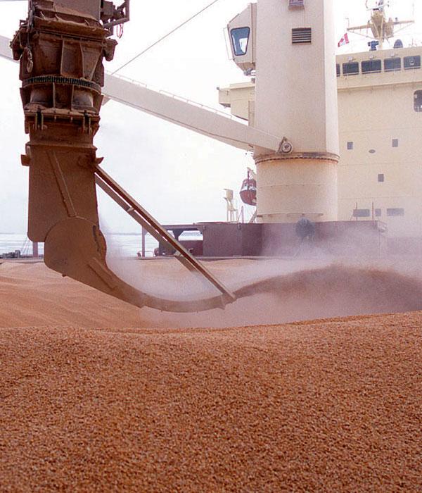 Появились свежие данные по отгрузке зерновых на экспорт