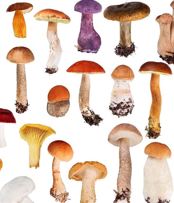 Самые большие грибы (ФОТО)