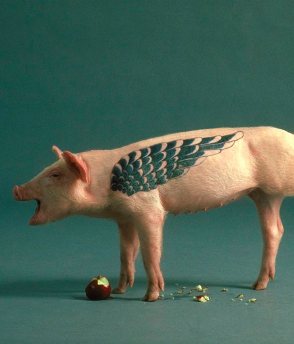 Татуированные свиньи: вчера и сегодня (ФОТО)