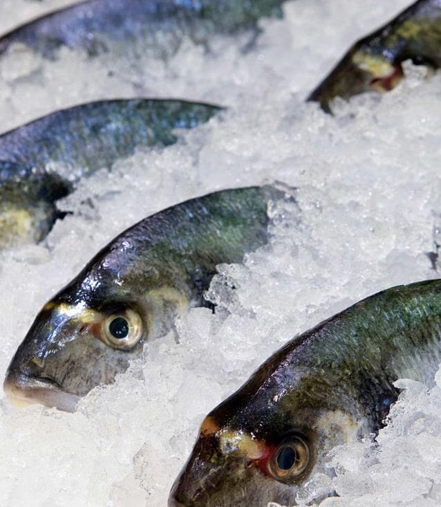 Украина значительно нарастила выпуск замороженной морской рыбы
