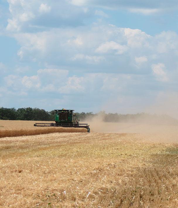 Украине не хватает комбайнов: ежегодные потери составляют около 6,5 млн тонн зерна