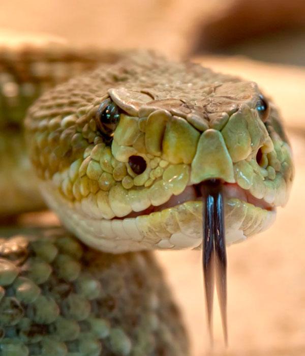 Украинские фермеры стали разводить змей