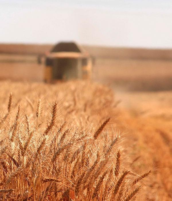 В Украине начинают собирать урожай