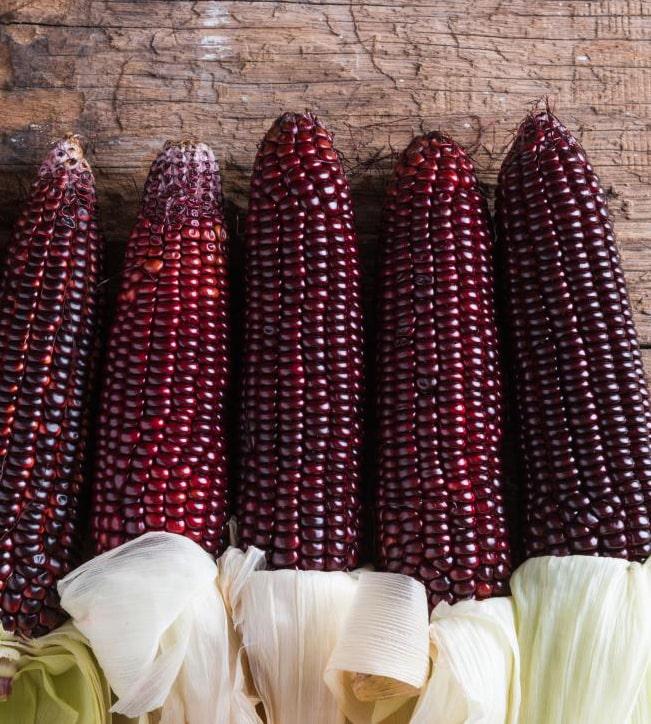 Винницкий селекционер впервые продемонстрирует сладкую фиолетовую кукурузу