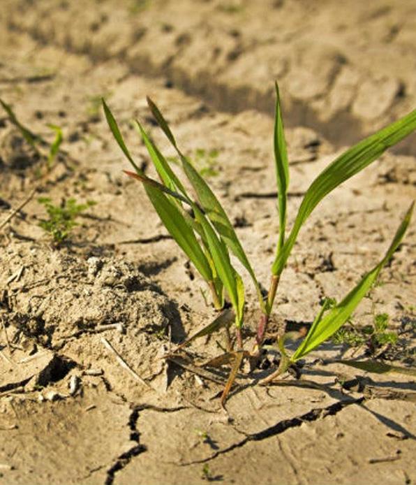 Франция просит 1 млрд евро на компенсацию засухи