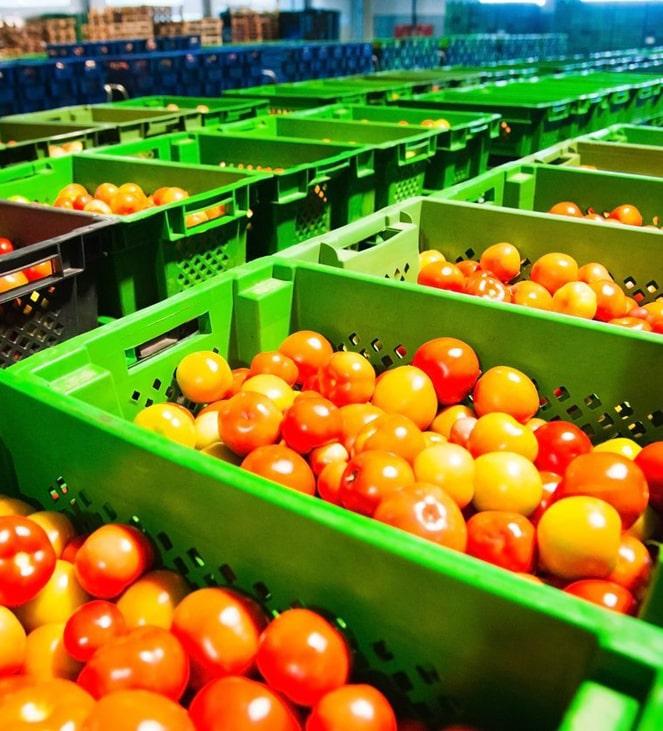 Исследователи из Сингапура разработали зонды для обнаружения этилена в овощах и фруктах
