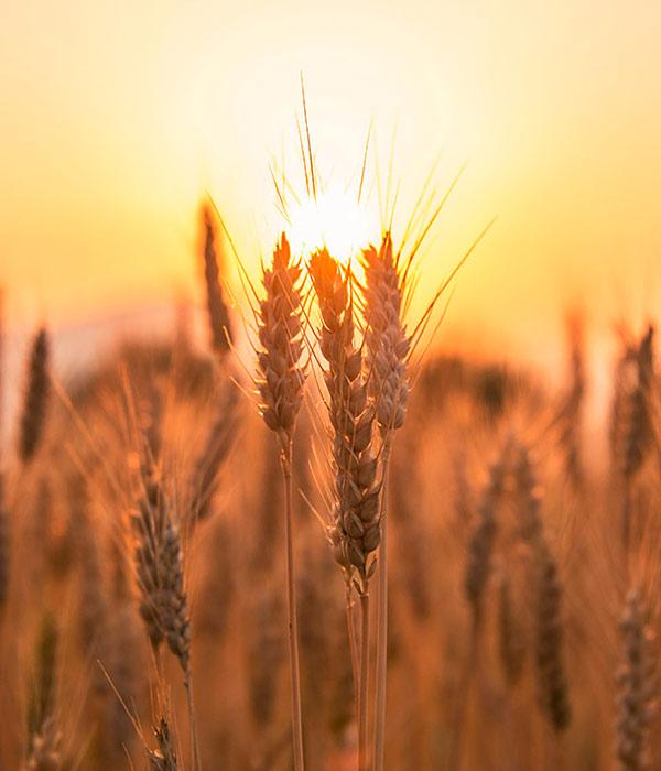 Минагрополитики хочет тратить 1% ВВП на нужды аграриев