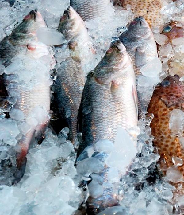 Молдова, Венгрия, Турция, Грузия и Германия активно скупают украинскую мороженую рыбу
