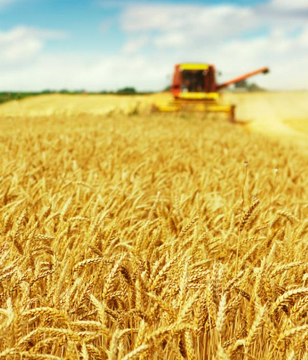 Собрано 2,7 млн тонн зерна