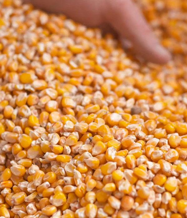 Увеличились внешние поставки зерновых