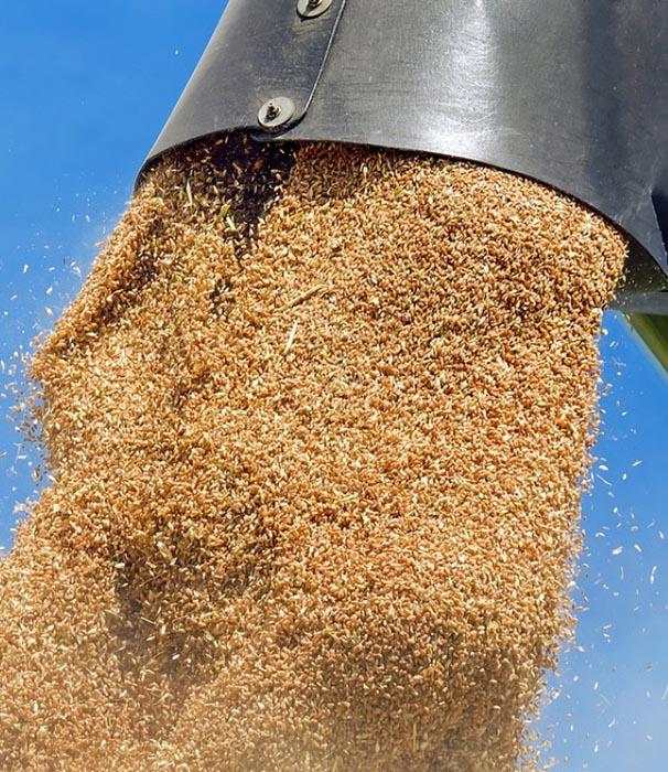 Зерновий рекорд