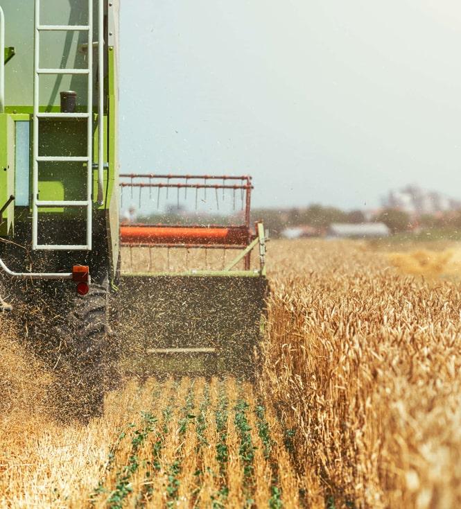 Жатва: аграрии намолотили 6,1 млн тонн зерна