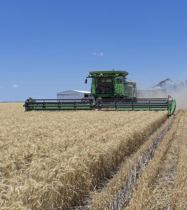 Аграрии собрали 35 млн тонн зерновых и зернобобовых