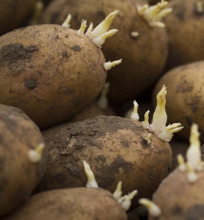 Нидерландские ученые нашли альтернативу хлорпропаму