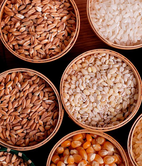 Прогнозируется рост производства зерновых и масличных