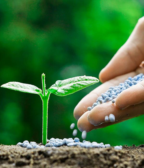 Удобрения: сколько заготовлено, эмбарго, квоты