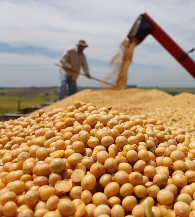 В Украине сделали ставку на производство ГМ-сои