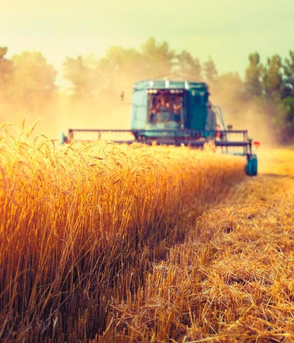 Жатва: ранних зерновых и зернобобовых собрано на 9,4 млн га