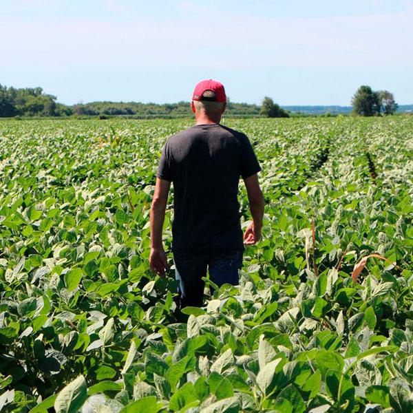 Большинство органических фермеров не в состоянии производить готовую продукцию