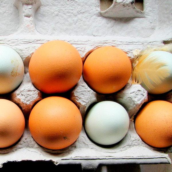 Экспорт мяса и яиц из Украины: обнародованы требованияСША