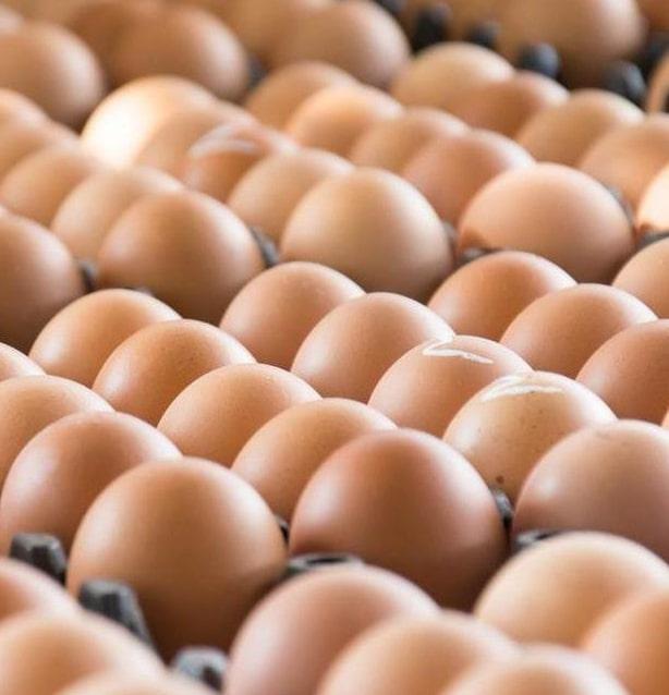 Внешние поставки яиц из Украины значительно увеличились