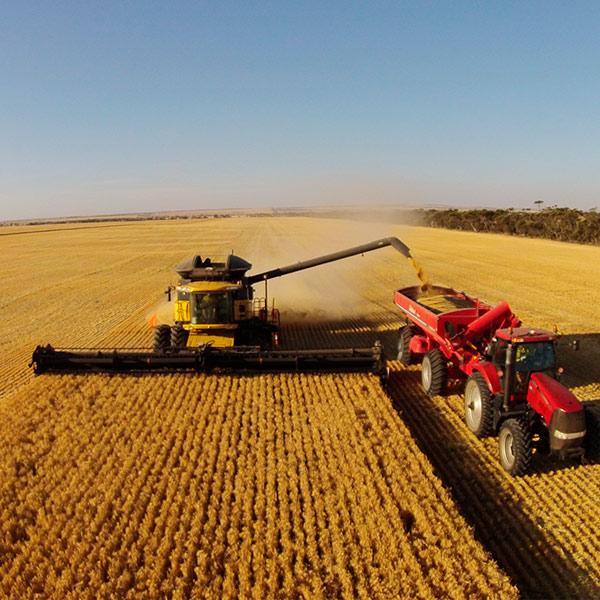 Жатва: намолочено 45,1 млн тонн зерновых и зернобобовых