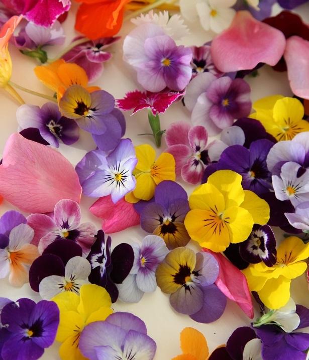 Съедобные цветы: от экзотики до тренда (ФОТО)