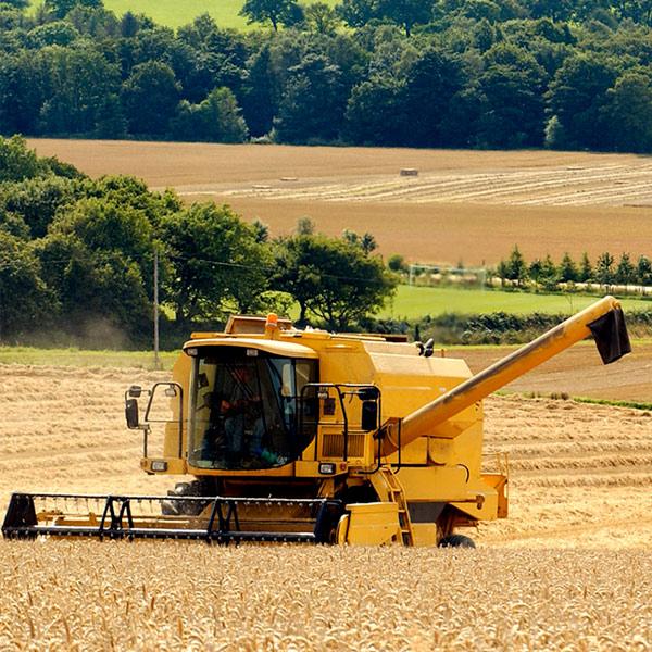 Сколько намолотили аграрии: свежие данные