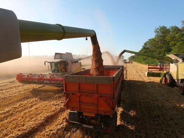 Украина активно экспортирует зерновые в Бангладеш, Египет и Индонезию