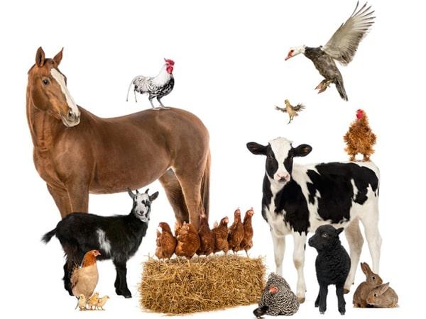 Животноводы требуют дотации у государства